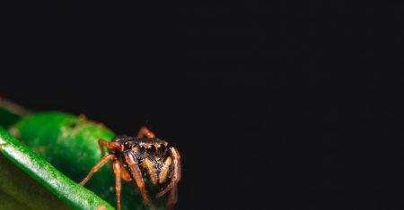 vuelo arácnido así consiguen volar las aranas