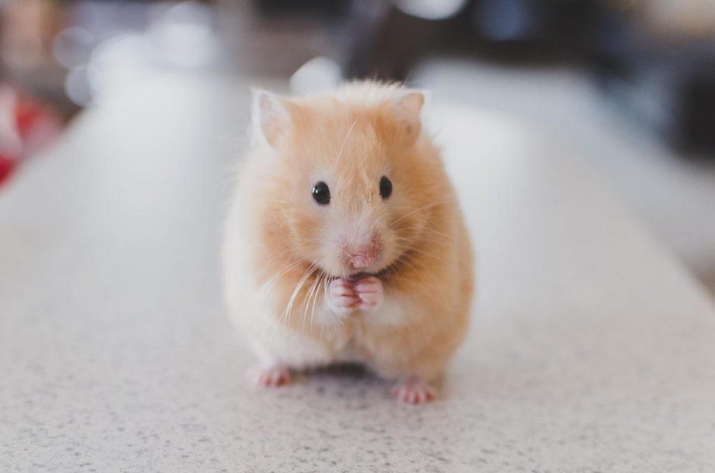 leyes universales de la vida en un raton