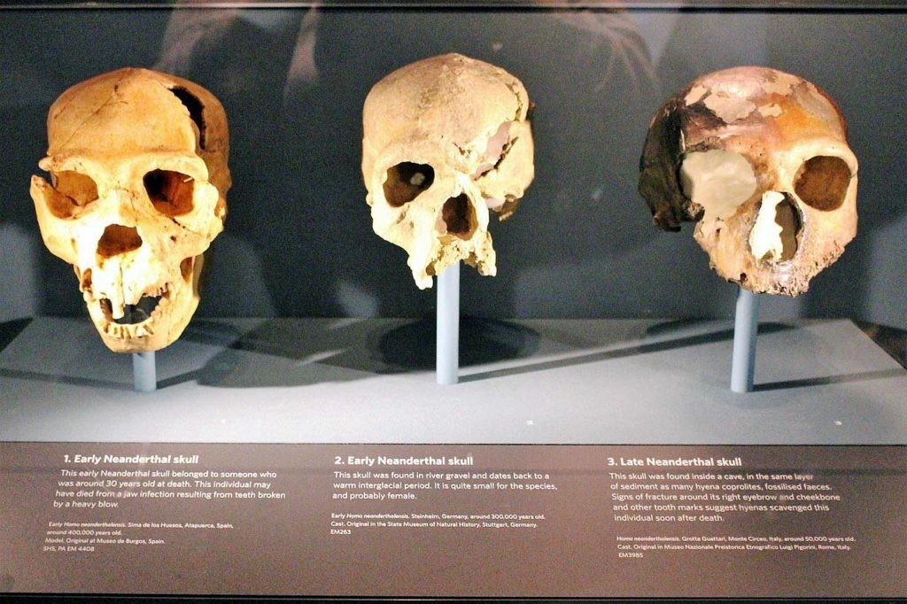 por qué desaparecieron los neandertales