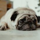 calcular de la edad de los perros