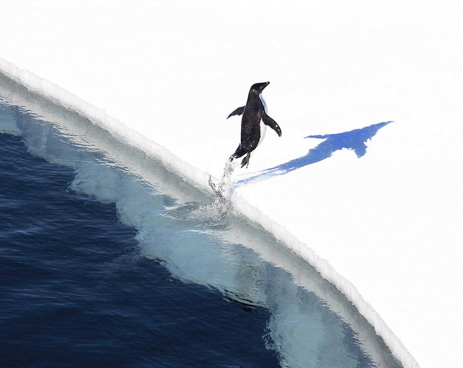 Pablo García Borboroglu es el presidente de Global Penguin Society, que busca, entre otras cosas, aumentar la concienciación medioambiental.