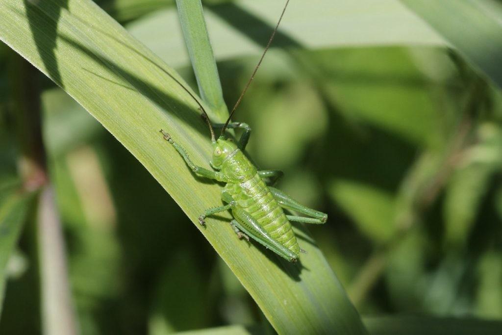 Insectos: la comida del futuro