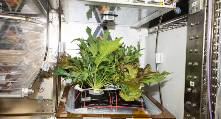 cultivar plantas en el espacio