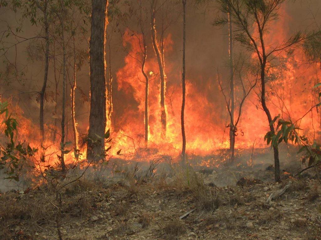 incendios y cambio climático, imagen de los fuegos en Australia en 2010
