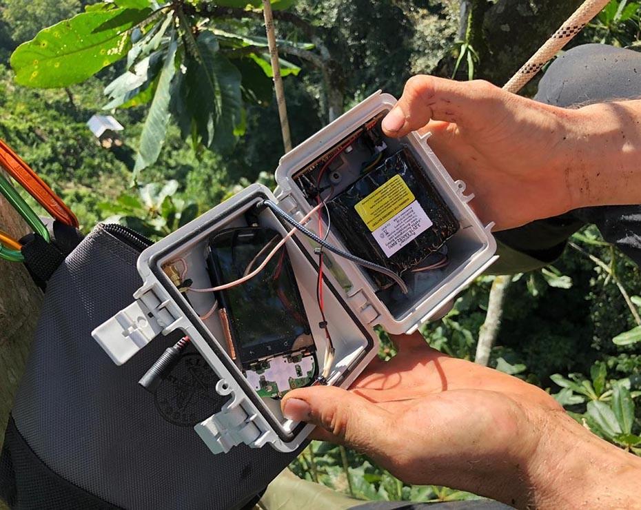 La ONG creada por Topher White usa dispositivos móviles para detectar sonidos en la selva.
