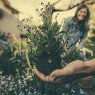 jardineria domestica