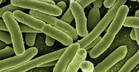 depresión y bacterias