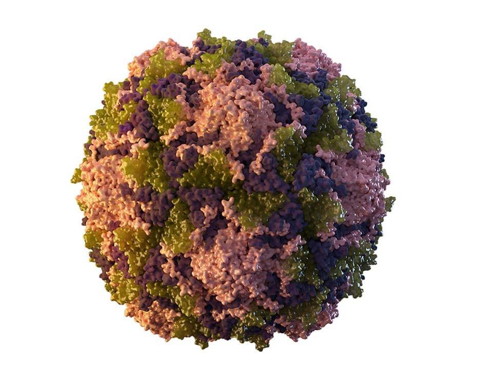 virus de la polio