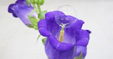 Flor con burbuja de polen para sustituir a abejas