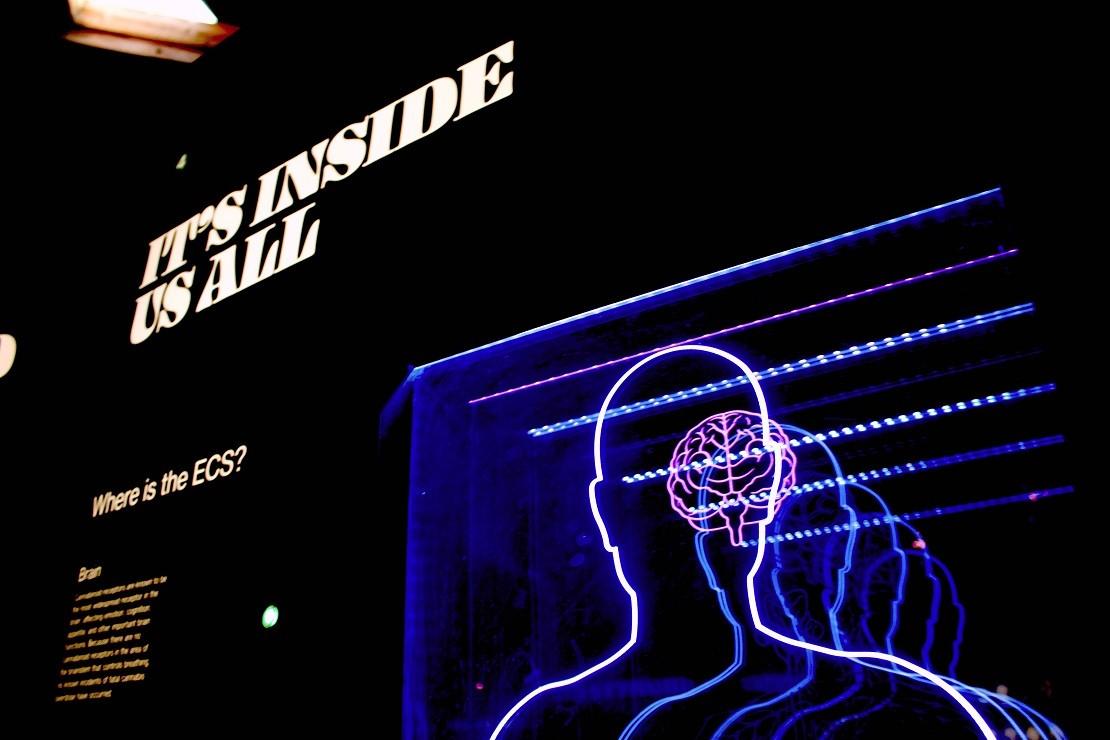 La consciencia representa uno de los enigmas del cerebro