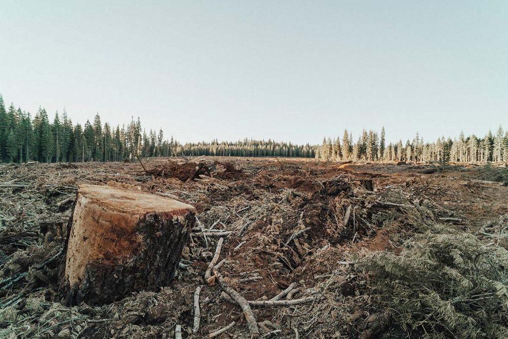 la deforestación y la destrucción de ecosistemas