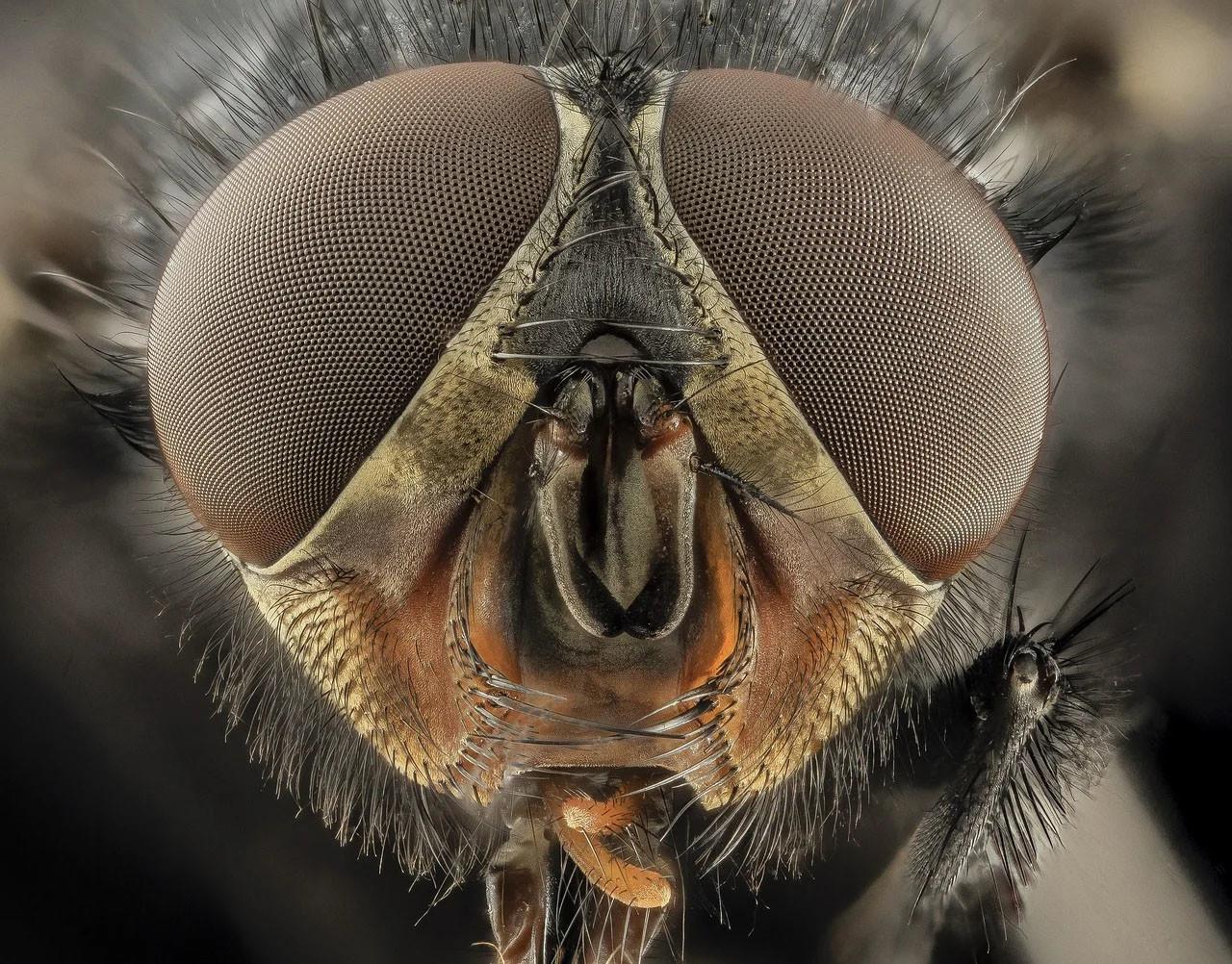 Moscas. Mediambiente. Entomo Agroindustrial