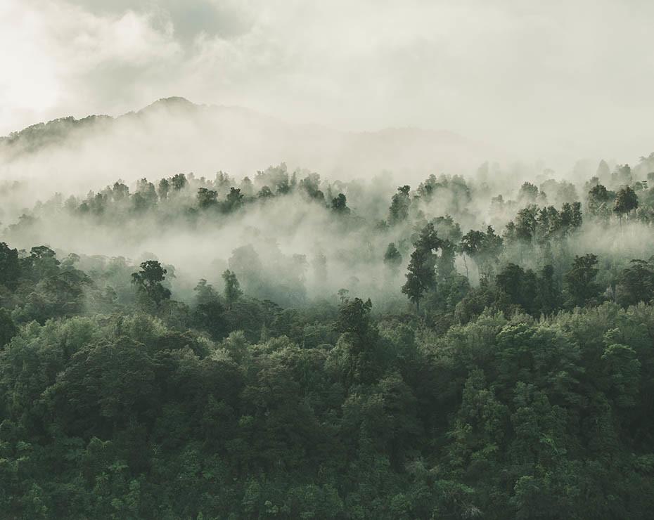 El profesor recuerda la importancia de gestionar los grandes bosques.