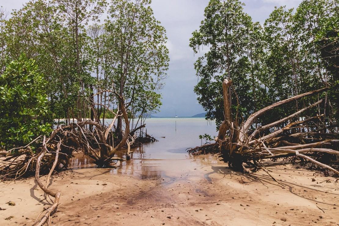 día internacional de los manglares
