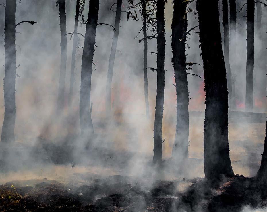 Los incendios zombis vuelven a la superficie con el aumento de las temperaturas.