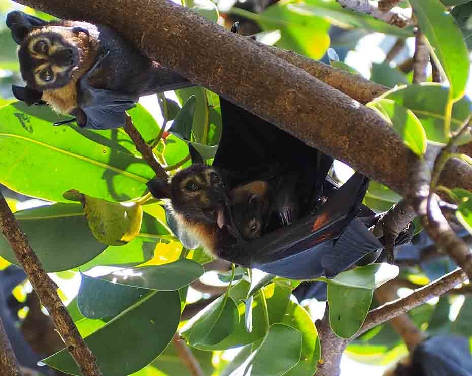 Los murciélagos son importantes reservorios de virus.