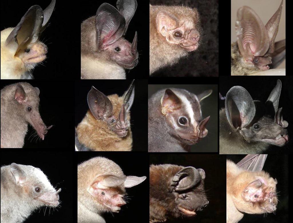 murciélagos de México