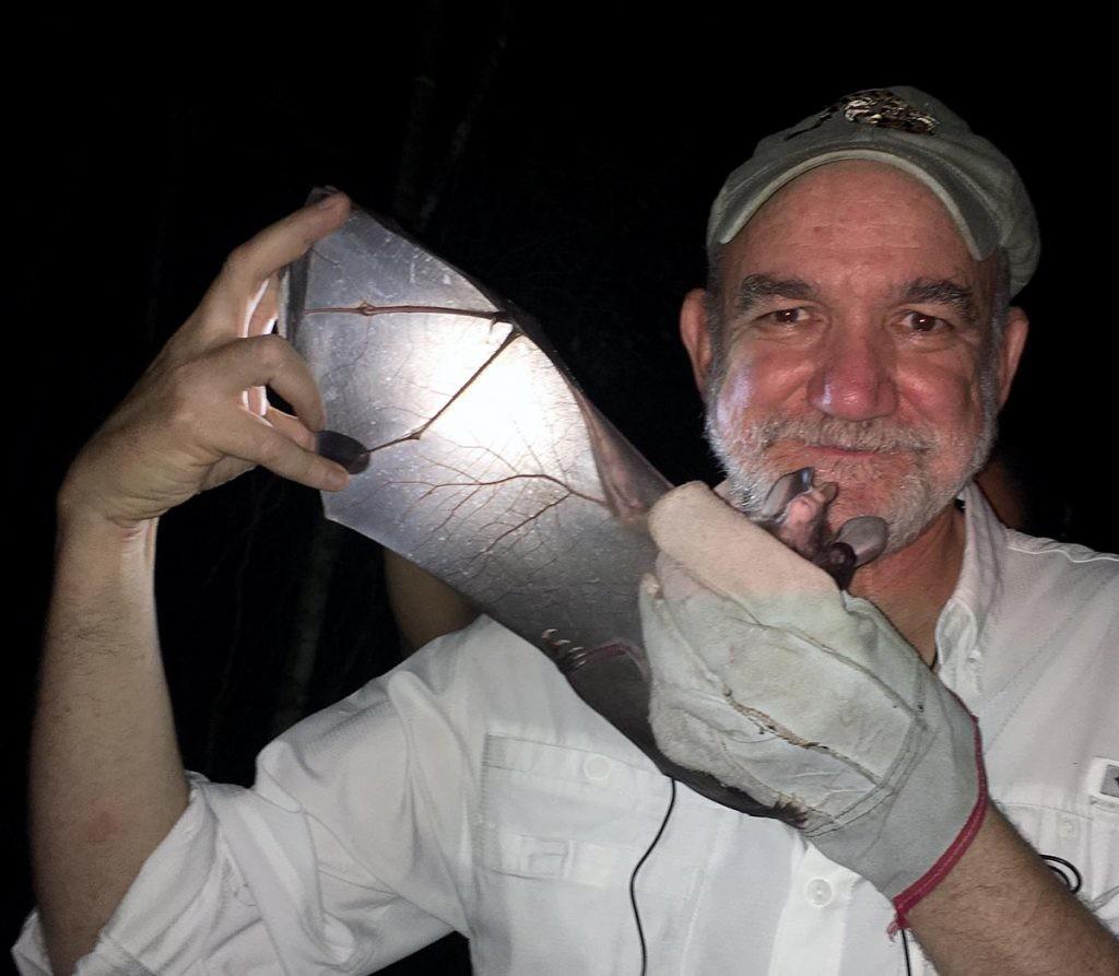 Rodrigo Medellín con un murciélago