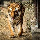 El tráfico de animales salvajes es un problema de dimensiones y consecuencias globales.