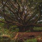 aprender de los arboles crecimiento regeneracion resiliencia