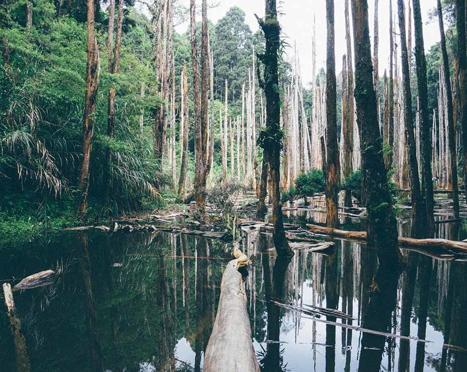 Establecer políticas forestales efectivas es fundamental para prevenir zoonosis.