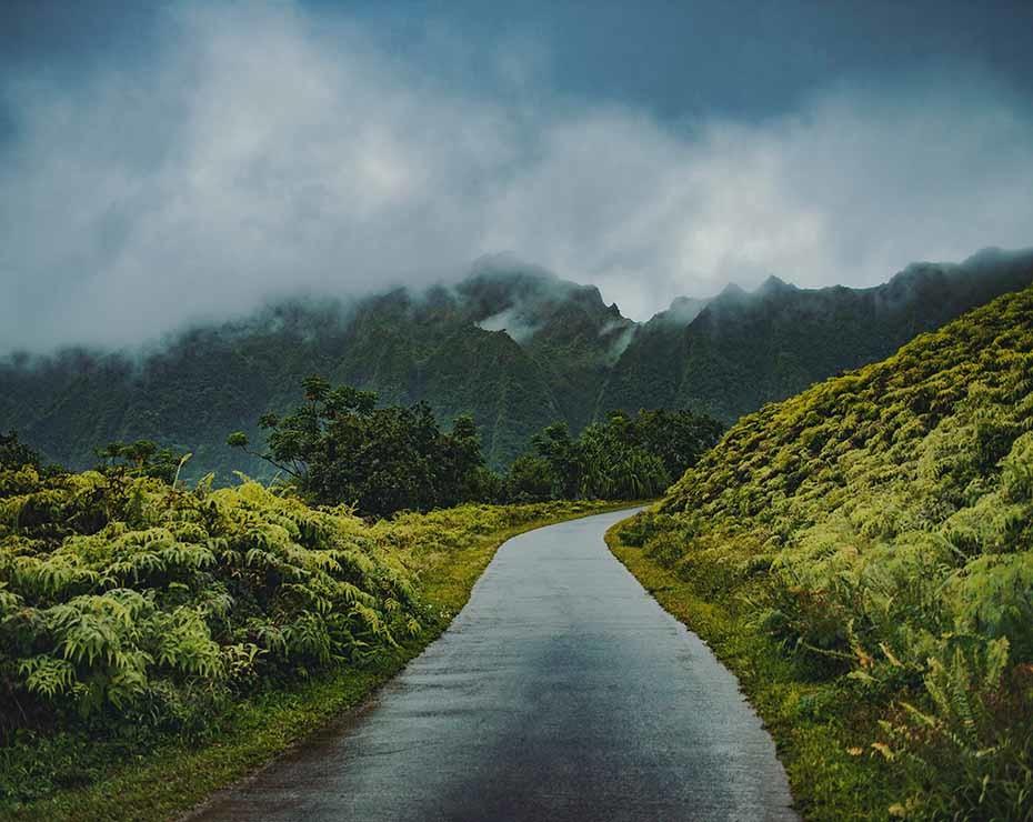 Millones de personas dependen de los bosques tropicales.