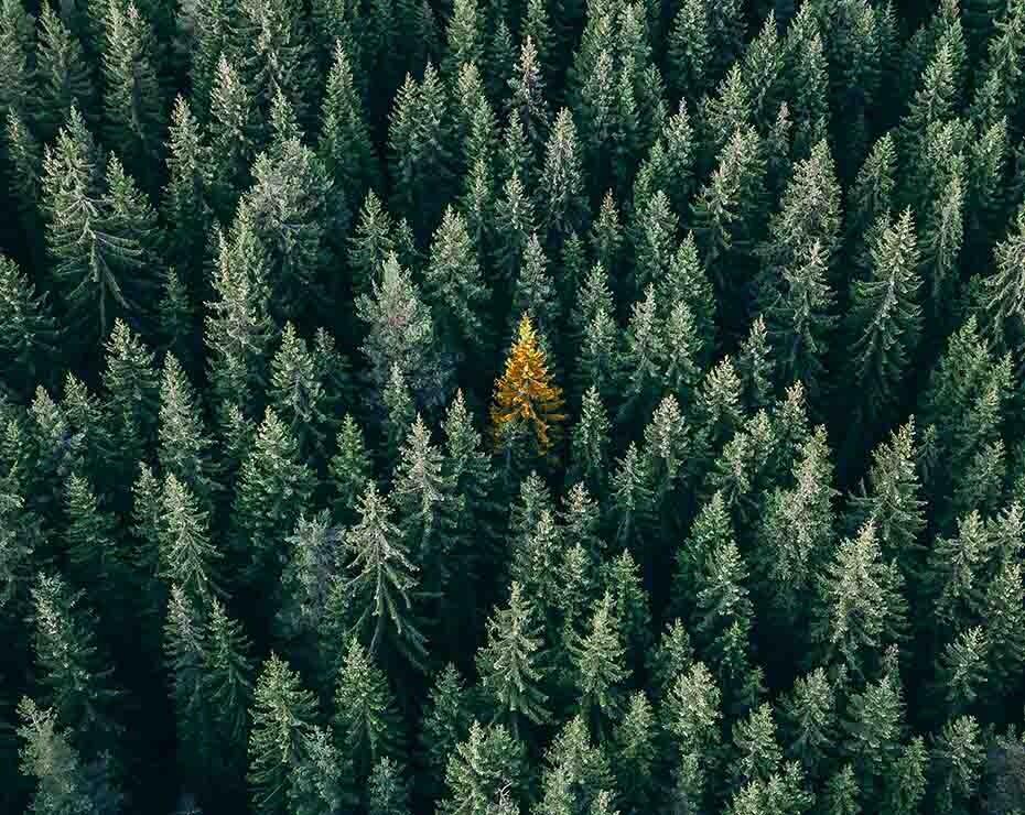 Los árboles pueden servir para investigaciones de botánica forense.