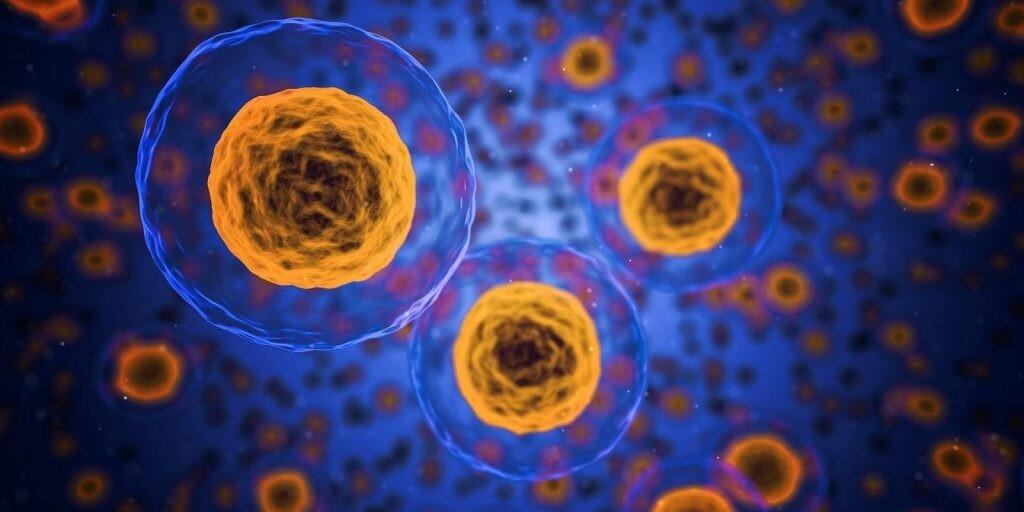 Definición y parte de la célula animal