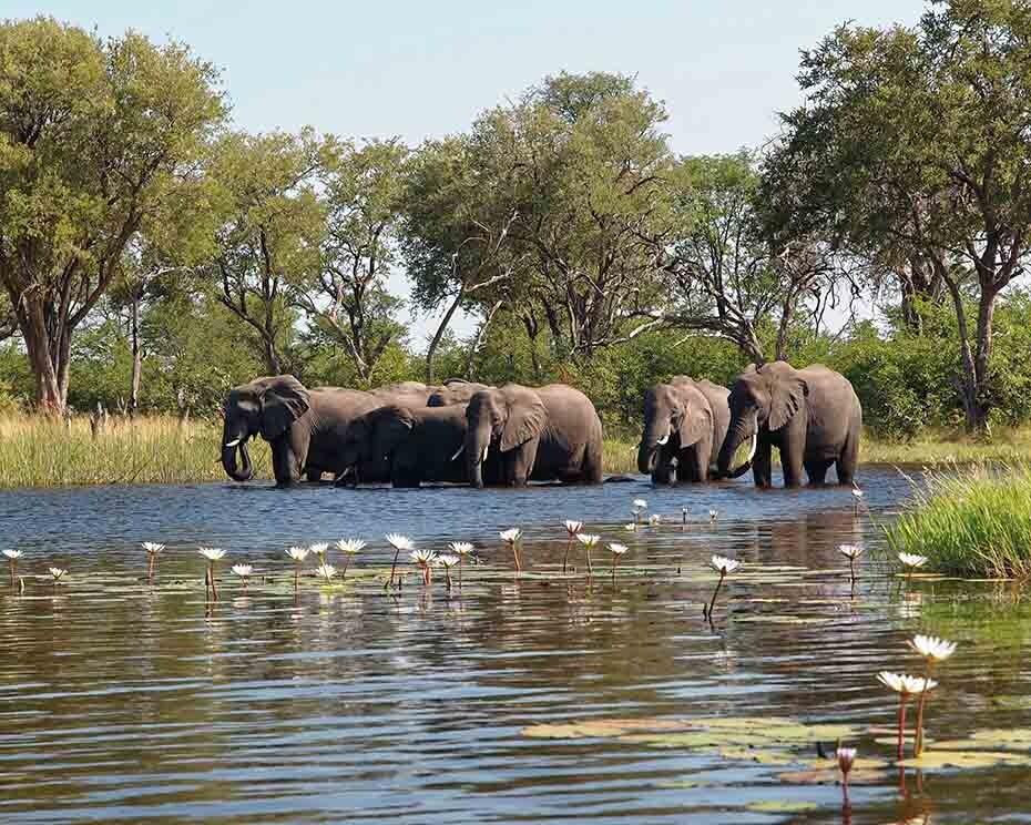 Las muertes de elefantes en Botsuana estaban relacionadas con el agua del río.