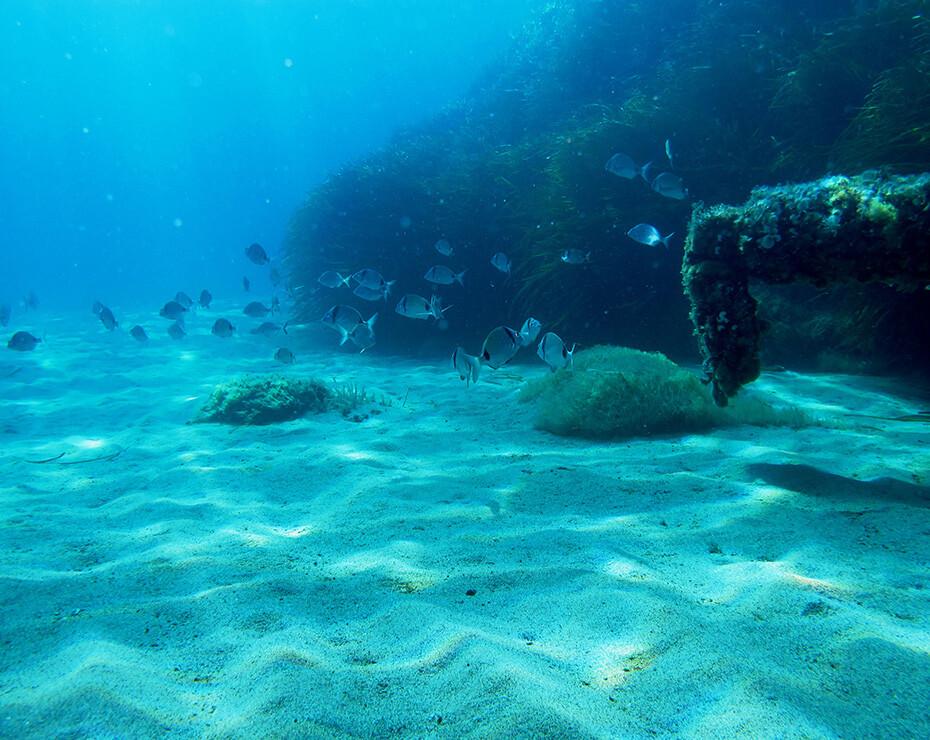 lecho del mar, se observan peces nadando