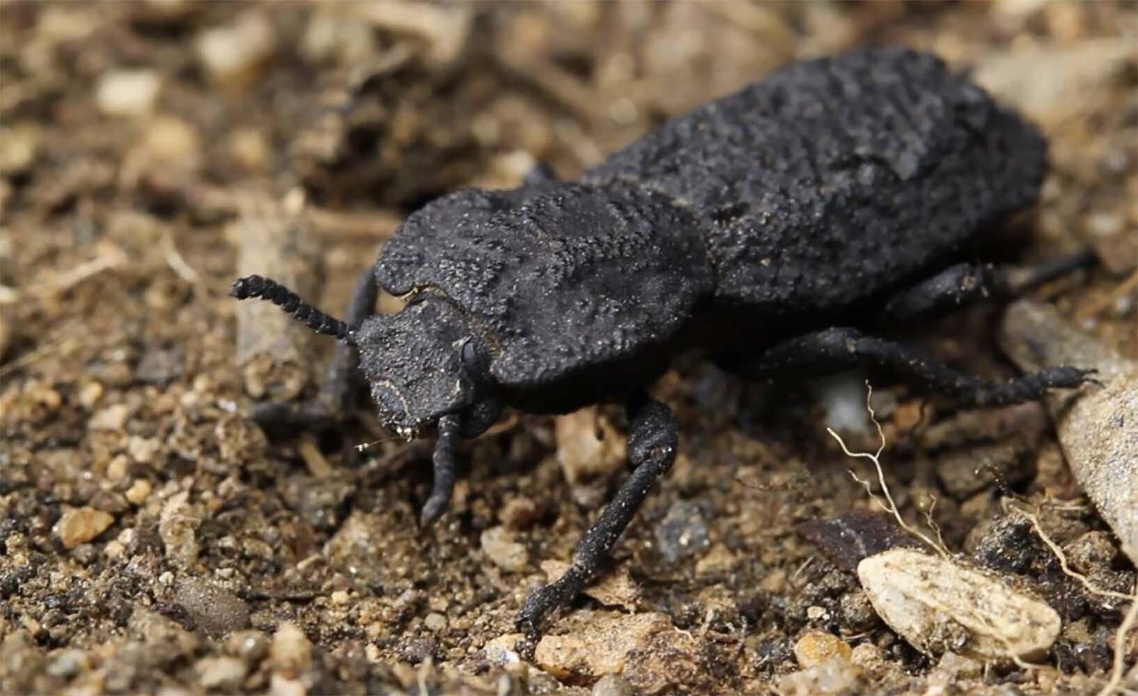 escarabajo aeronáutica