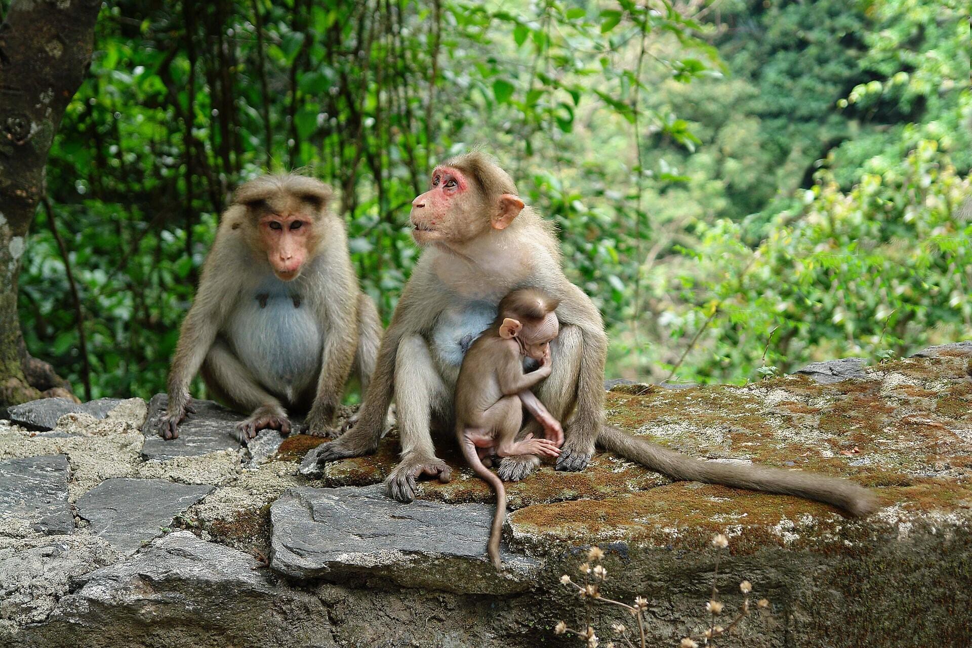 distanciamiento social en animales
