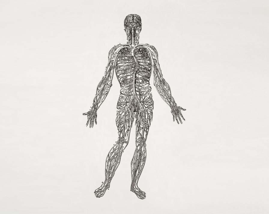 Yolanda Sanz estudia la interacción de las bacetrias con el sistema nervioso humano