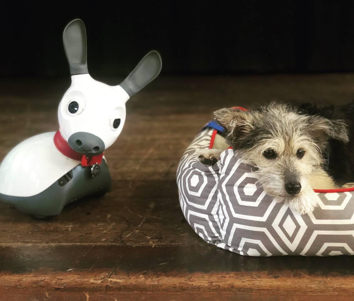 robots sociales perros