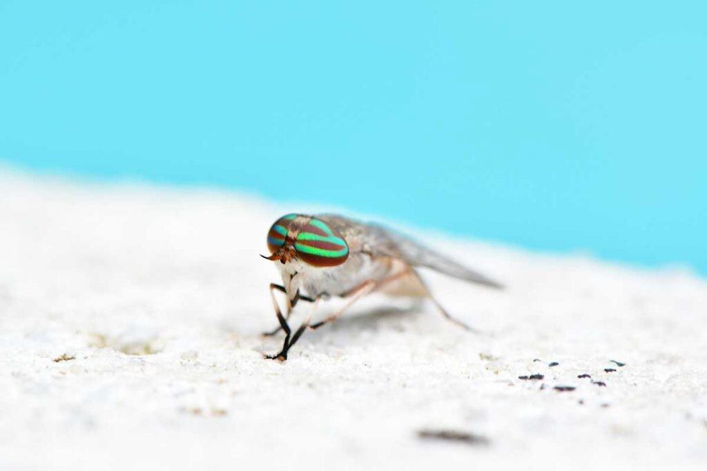 difícil volar para este insecto