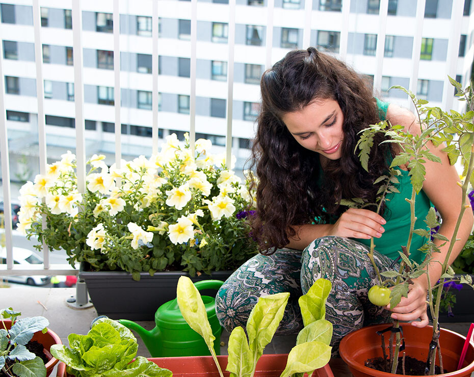 plantas en casa bienestar pandemia psicologia