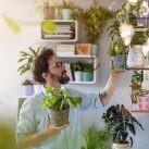 plantas en casa mejora bienestar pandemia confinamiento