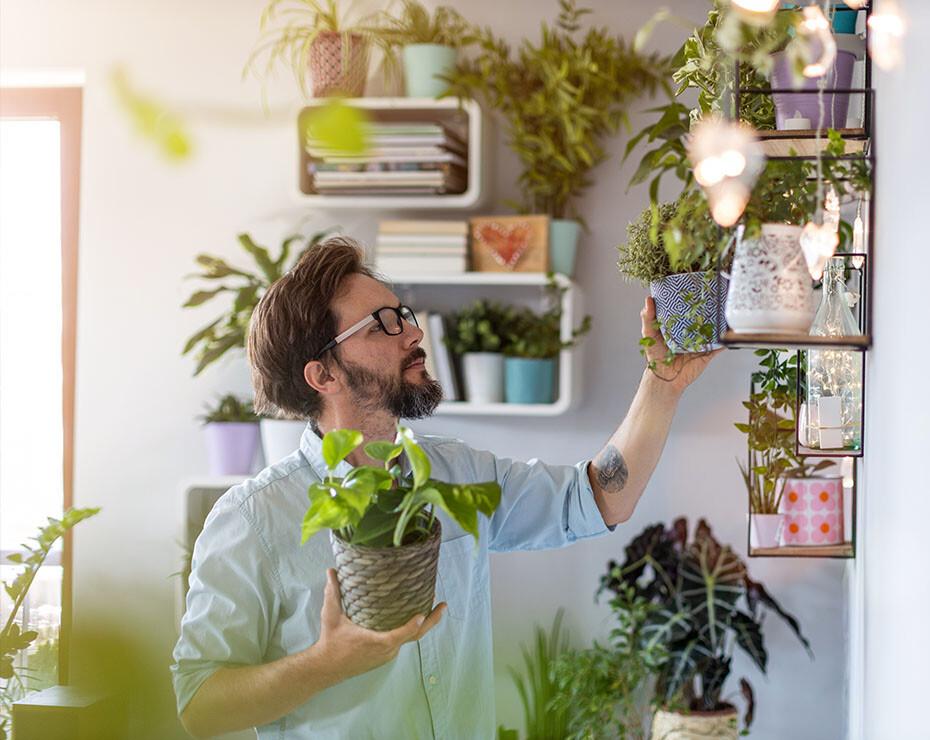 Tener plantas en casa mejora el bienestar durante un confinamiento