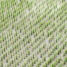 etiquetas inteligentes en agricultura
