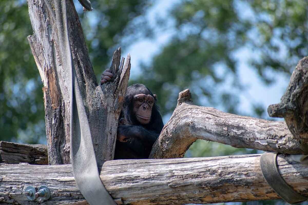 Publicar fotos de monos en redes sociales puede aumentar la demanda de estos animales en el mercado negro.