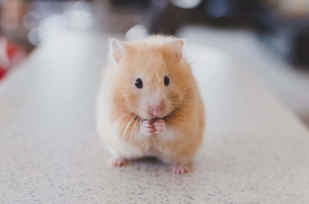 estimulación de la corteza visual en ratones