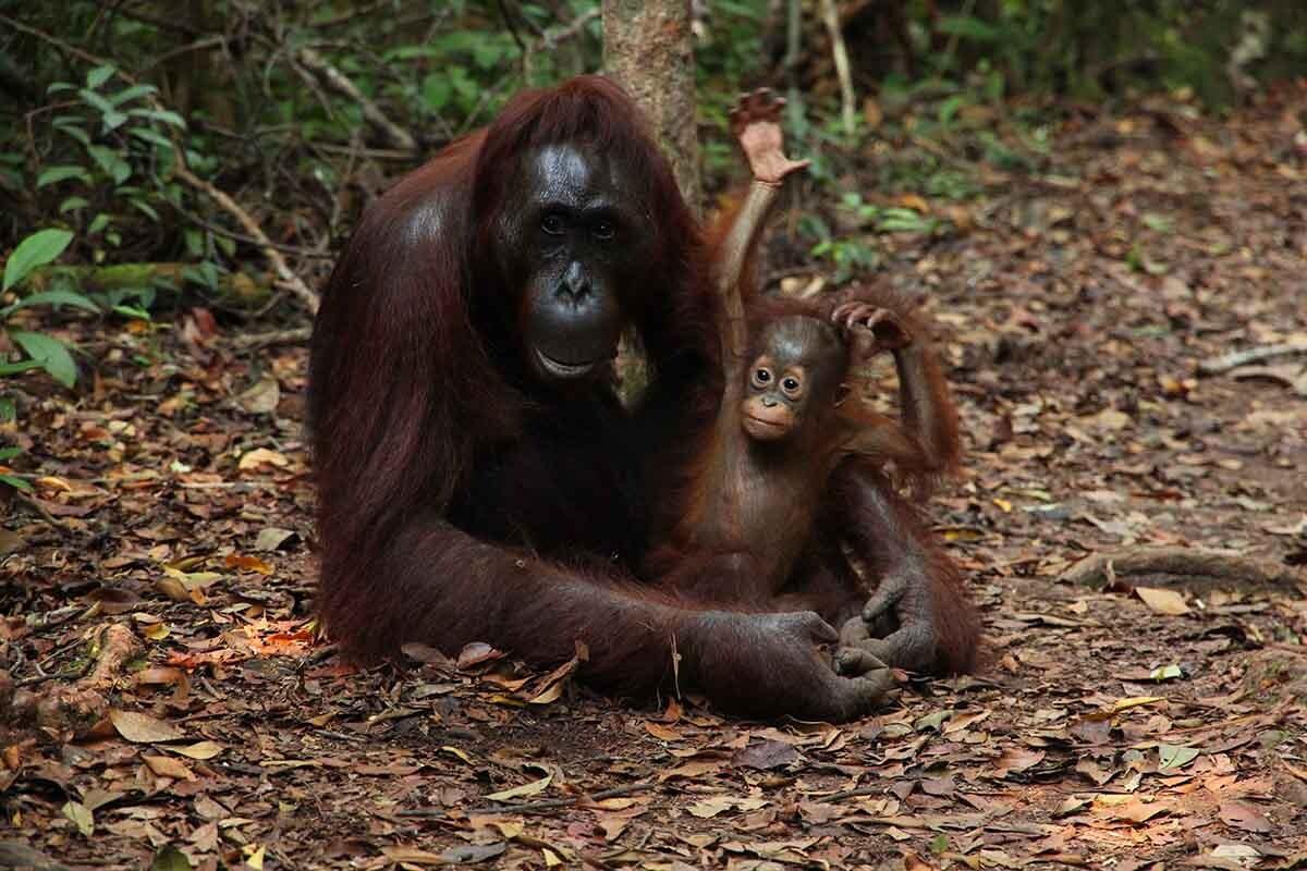 Publicar fotos de monos en redes sociales puede dar una imagen equivocada de su estado de conservación.
