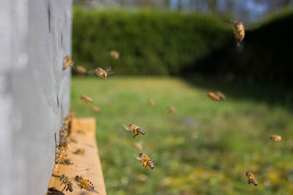 una colmena de abejas productoras de miel