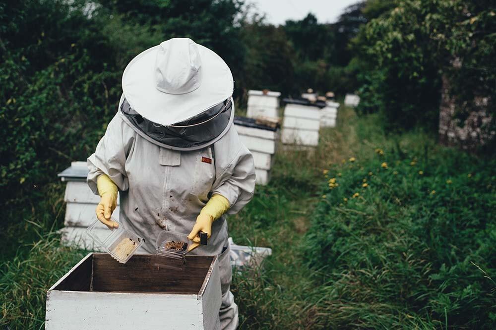trabajo de un apicultor