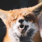 la risa en animales es algo habitual