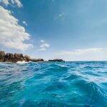 Un informe reciente de WWF señala que el Mediterráneo se tropicaliza, mientras otro de la ESA indica que el Ártico se tropicaliza.