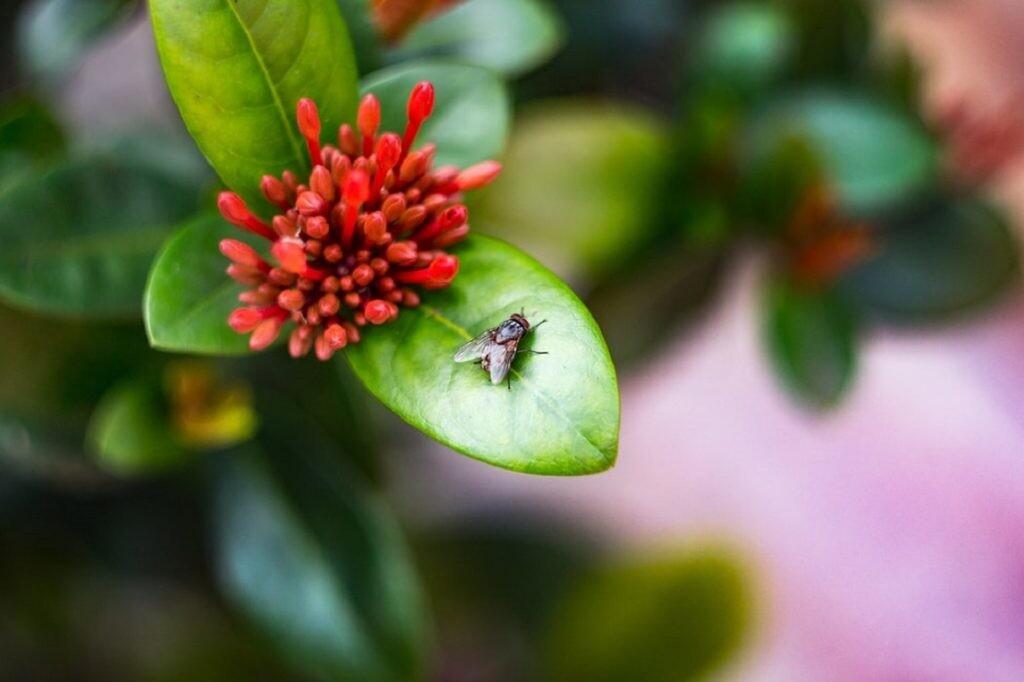 remedios que no funcionan con las moscas
