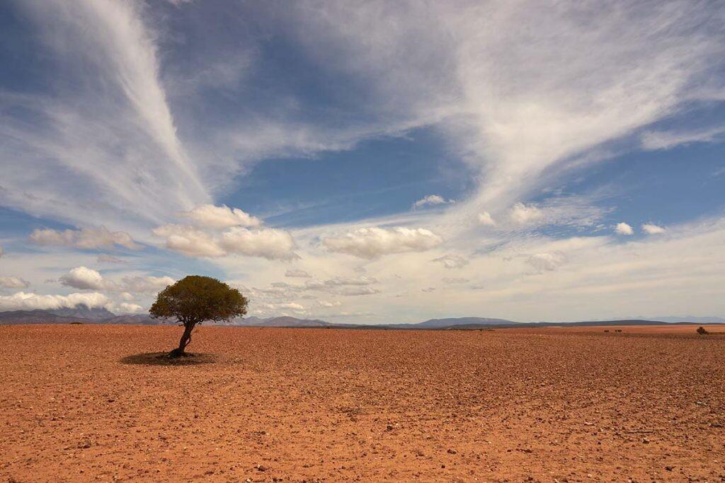 imagen de un terreno árido