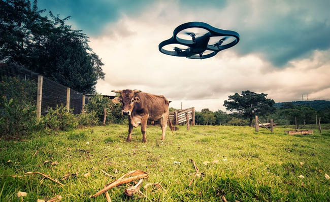 dron y vaca
