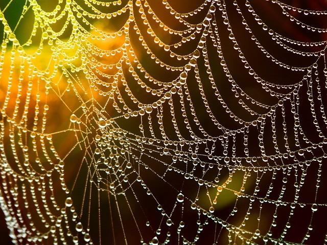 network-spider